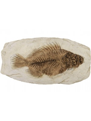 Fosília ryby